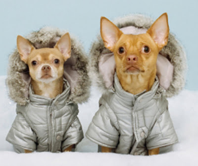 Dogs wearing parka jackets | Heidi's Hounds |South Shore MA