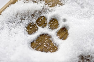 Paw Print in the Snow | Heidi's Hounds | South Shore MA