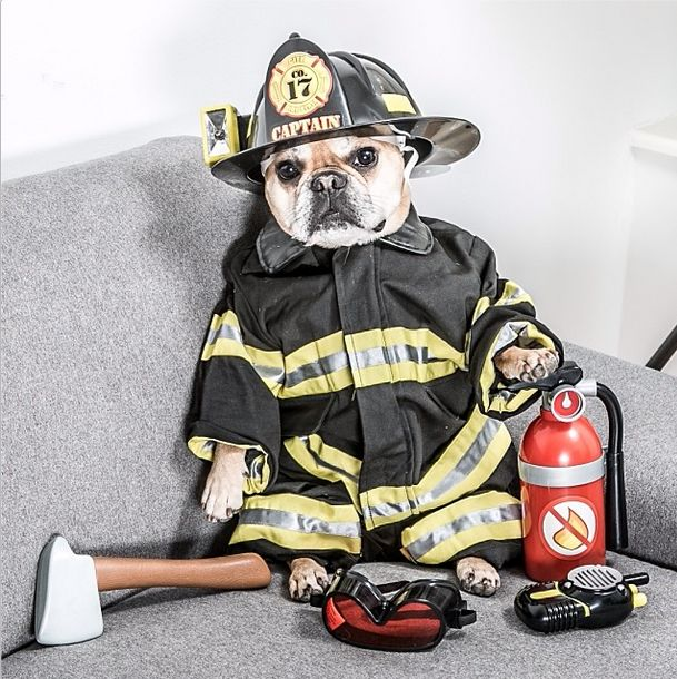 Dog Dressed as Firefighter | Heidi's Hounds | South Shore MA